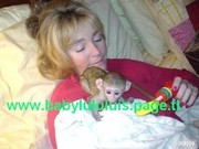 Lovely Baby Capuchin Monkeys For Adoption